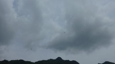 午前中パラグライダー