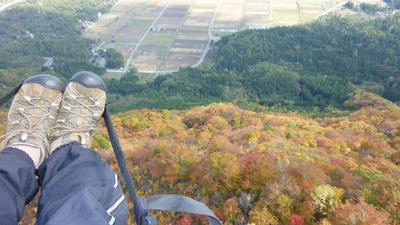 紅葉の上を飛ぶ